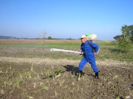 ライ麦の播種