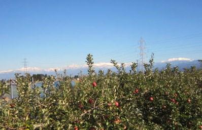小春日和のリンゴ園・採用