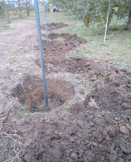 植え穴掘り