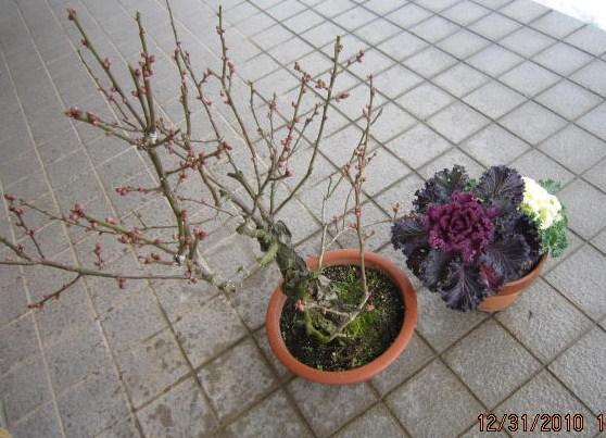 迎春の飾り