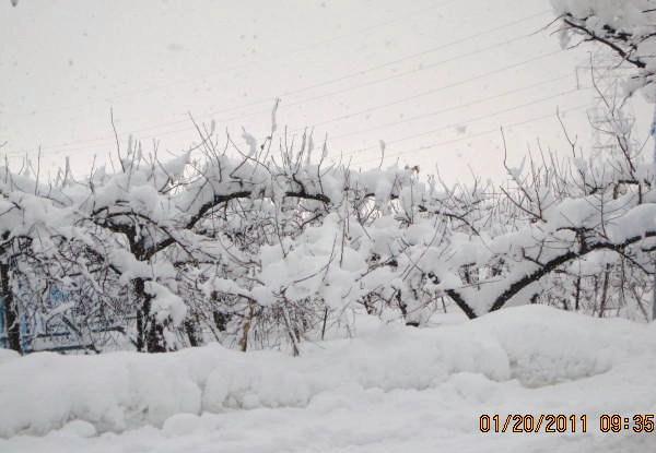 枝の上の雪