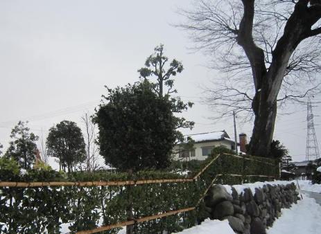 老木と石垣