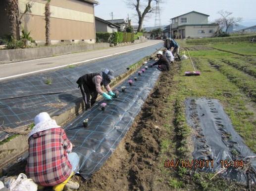 中央幹線水路シート張りと花植え