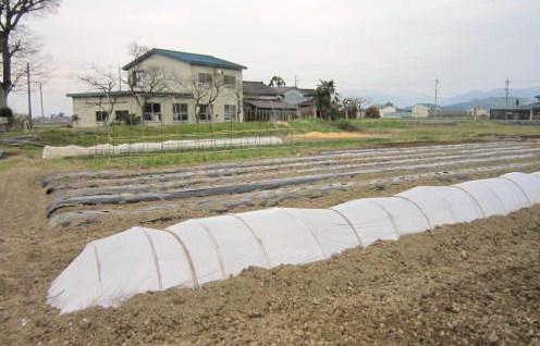 西瓜を植えて畑らしくなる