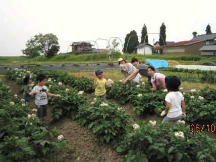 母子で農業体験