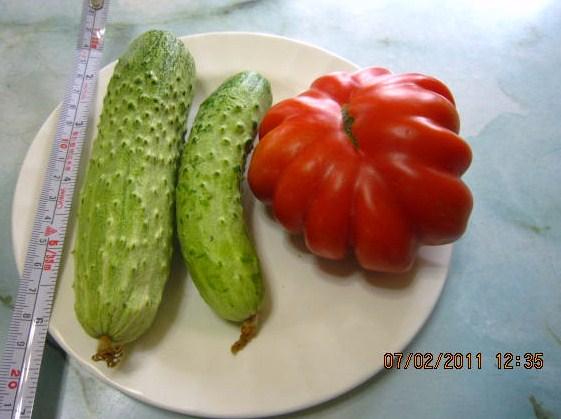 黄瓜とフレンチーノトマト
