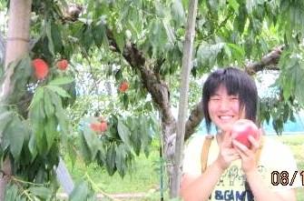 彩乃さん桃摘み