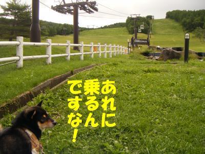 8_20130211125342.jpg