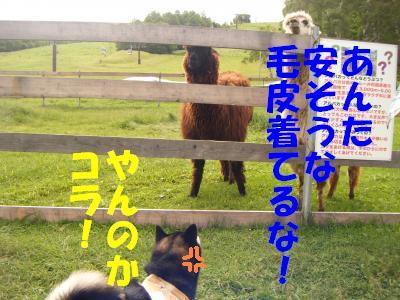 yatugatake21.jpg