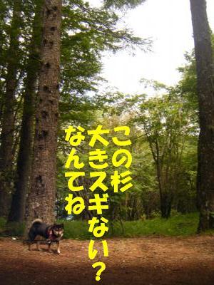 yatugatake24_20130211130031.jpg