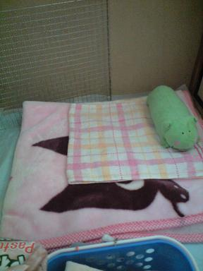 みんくんの毛布♪