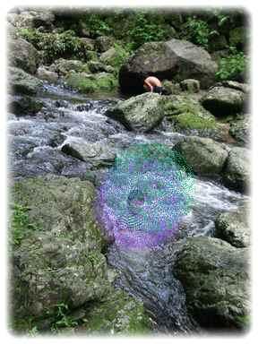 箕面で泳ぐ