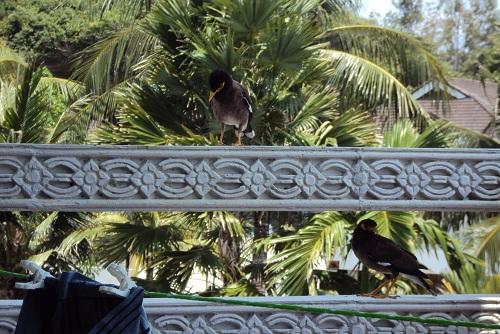 phuket 2011 010