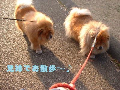兄妹でお散歩♪
