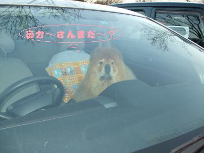 車の中で待ちぼうけ。