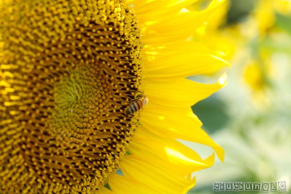 2011_08_12_5.jpg