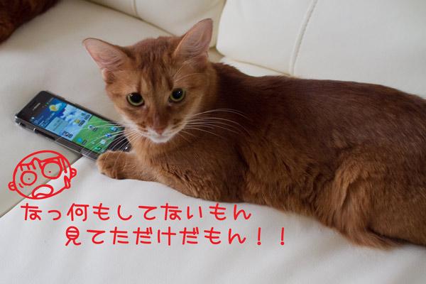 2011_08_14_7.jpg