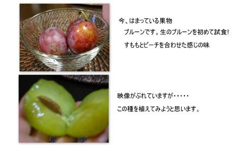 2010-09-234.jpg