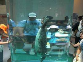 日本平2010 (5)