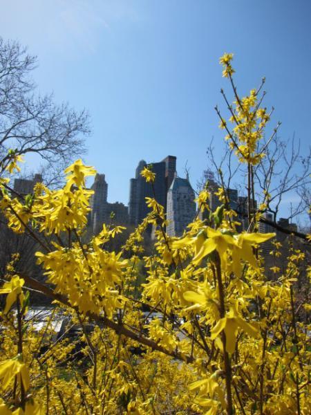 Central Park 032710