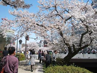 松川の桜20100410