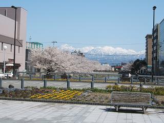 ボルファート横の桜20100410