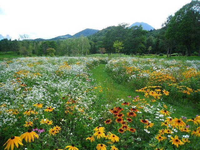 素敵な花の道