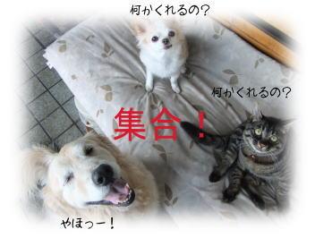 201009213.jpg