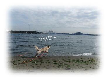 201101232.jpg