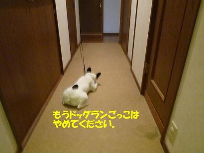20110527dai1