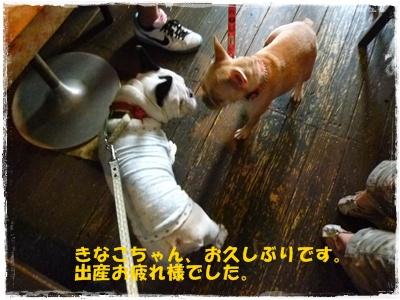 20110625きなこ