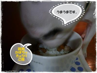 20110921food