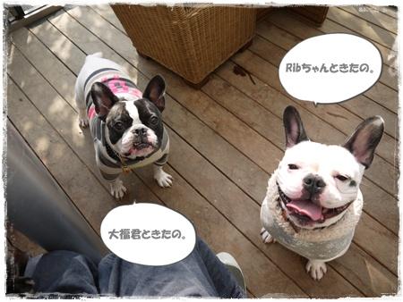 20111114rib&daifuku