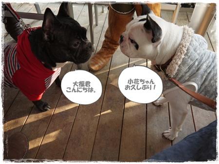 20111114kohana&daifuku