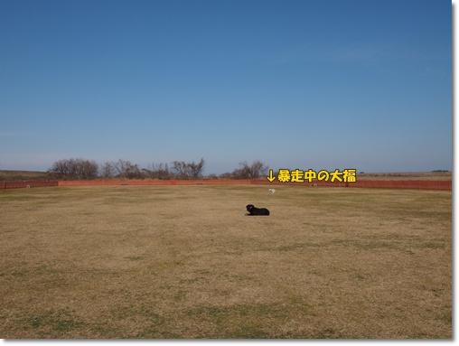 20120117f.jpg
