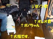大福Cafe-20110320aisatu