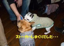 大福Cafe-20110320suto