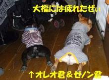 大福Cafe-20110320zenon&oreo
