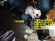 大福Cafe-20110320hime&taro