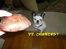 大福Cafe-20110323しいたけ