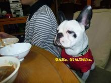 大福Cafe-20110324dai2