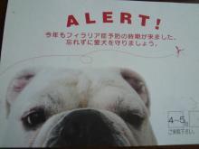 大福Cafe-20110401a