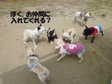 大福Cafe-20110417nakama