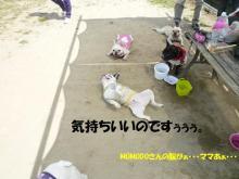 大福Cafe-20110417泥だらけ