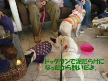 大福Cafe-20110417baa-riv