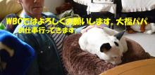 大福Cafe-20110417papa