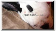 大福Cafe-20110506かまれた