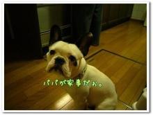 大福Cafe-0510papa