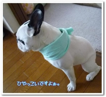 大福Cafe-20110513cool1