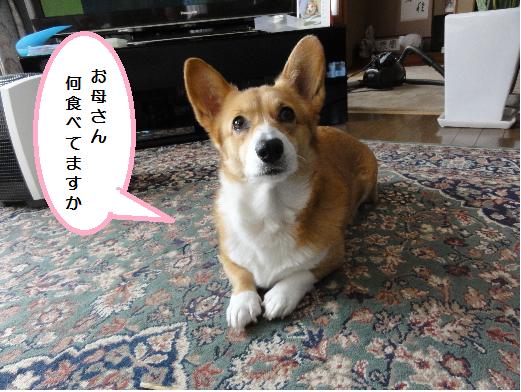 何食べてんの?